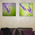 2 lavender prints above sofa
